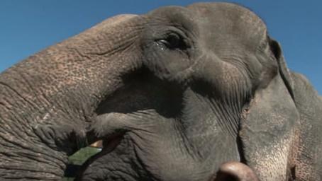 La retraite de l'éléphant Thong Kam