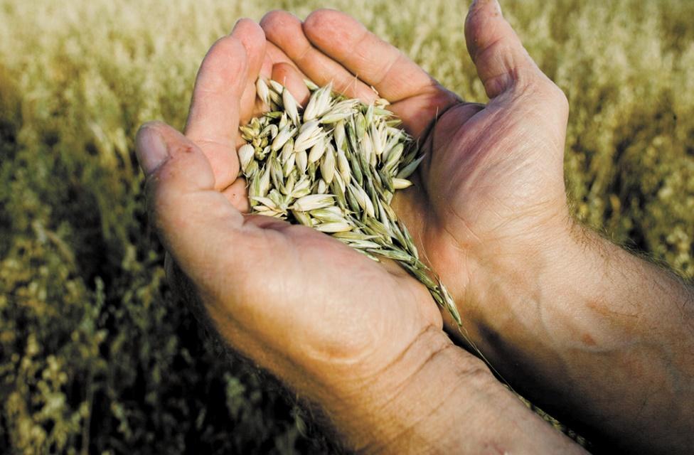 Le secteur semencier marocain s'active pour contribuer à renforcer la sécurité alimentaire
