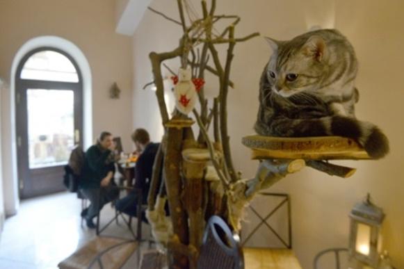 Les chats brisent la glace aux cafés à Prague
