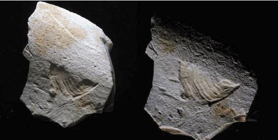 Insolite : Gravé il y a 35.000 ans