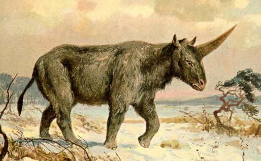 Des hommes préhistoriques auraient pu côtoyer la licorne sibérienne