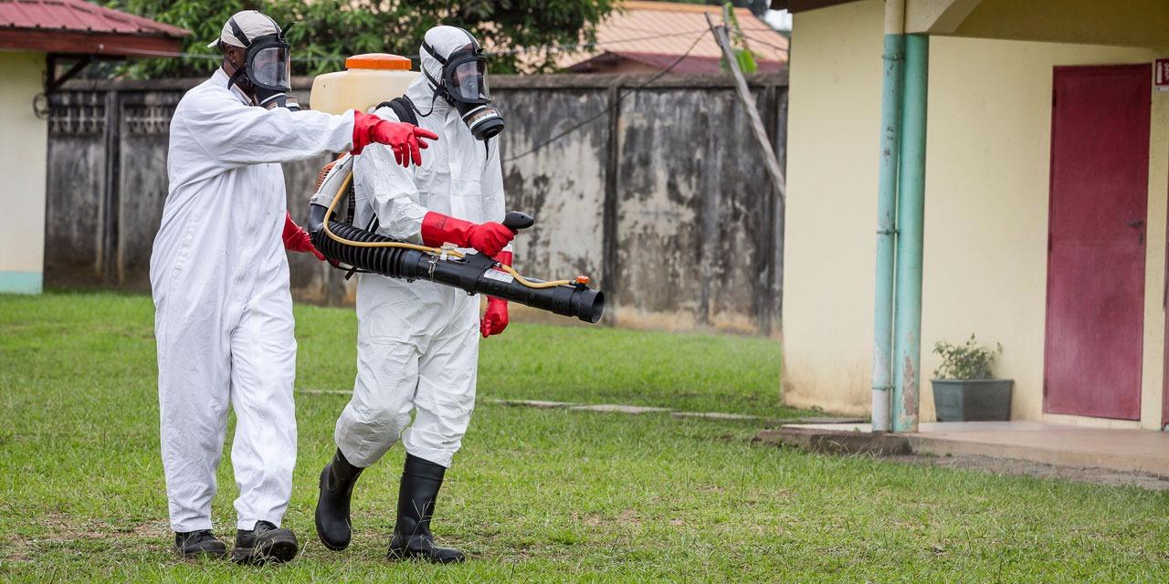 L'OMS estime possible une augmentation significative du nombre de cas de Zika