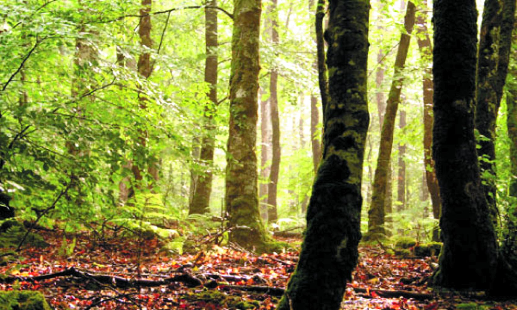 Le Maroc résolument engagé  à protéger  son patrimoine forestier