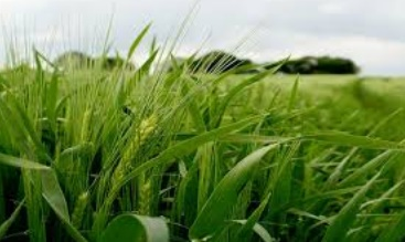 Un PIB agricole maîtrisé à 110 MMDH