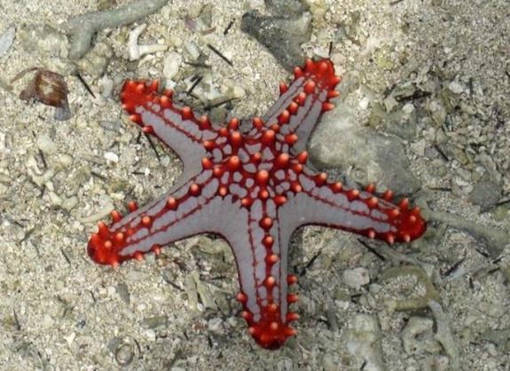 Fin de l'hécatombe des étoiles de mer sur la côte ouest américaine