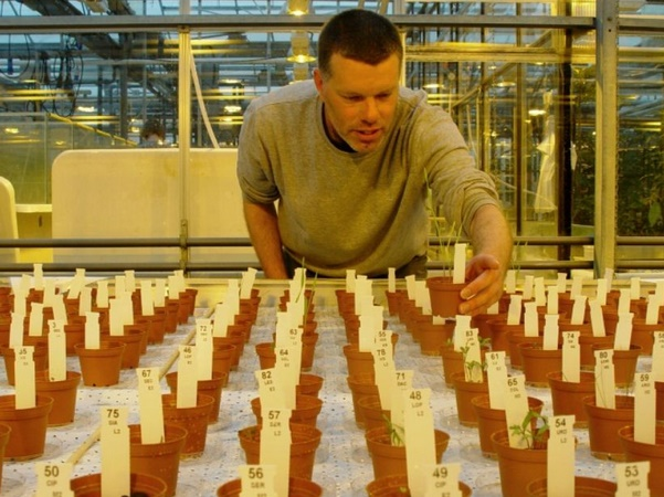 Des pommes de terre cultivées dans le sol aride de Mars