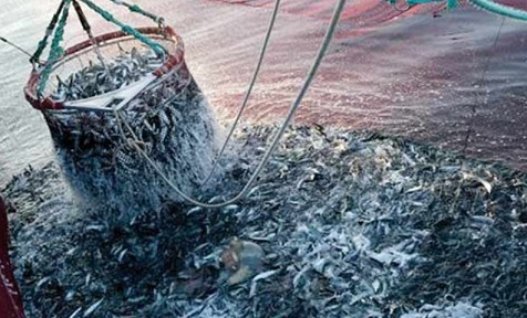 Hausse des produits commercialisés de la pêche côtière et artisanale