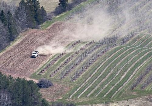 Les cultures OGM pas plus risquées pour l'environnement et la santé
