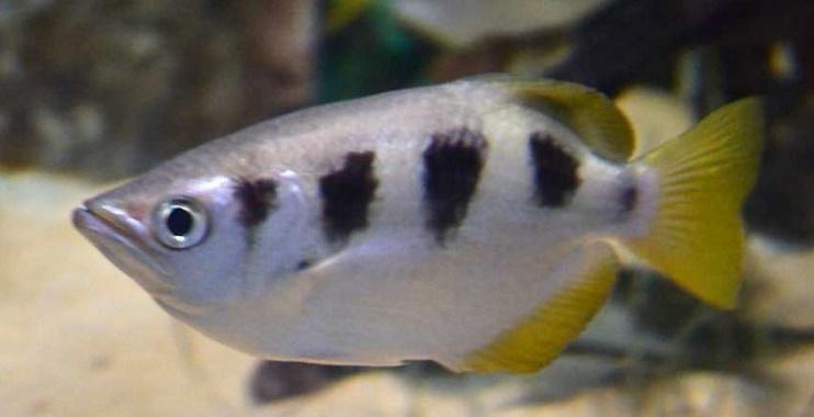 Insolite : Un poisson qui a l'œil