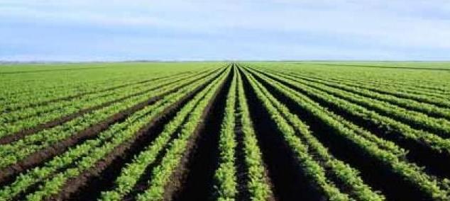 14 MMDH investis dans l'opération PPP sur des terres agricoles de l'Etat