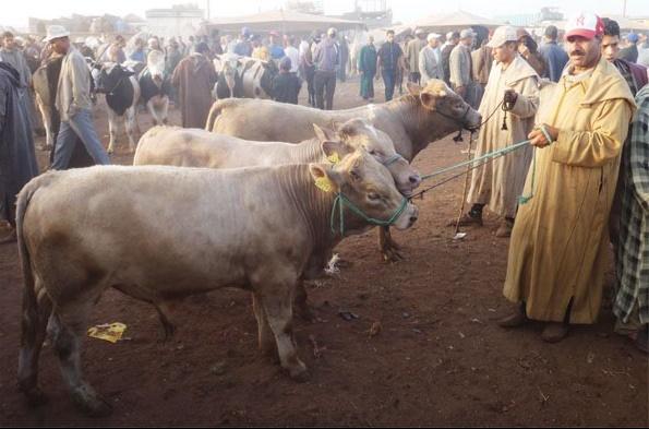 Commercialisation des aliments composés subventionnés au profit des éleveurs bovins