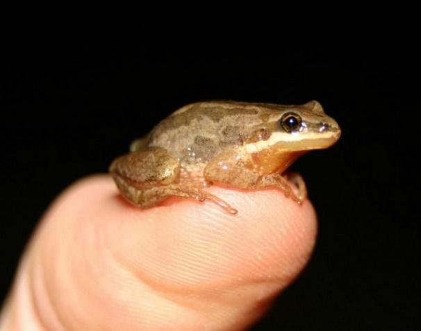 Insolite : Petite grenouille