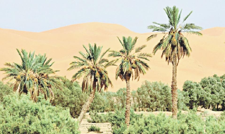 Renforcer les approches favorisant la conservation de la biodiversité au Maroc