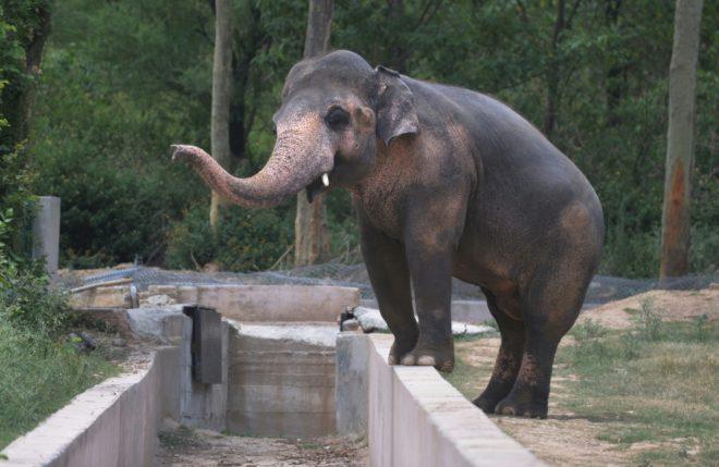 Emoi au Pakistan sur le sort d'un éléphant en captivité