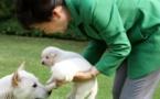 Insolite : Les chiens de Mme Park