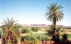 Région de Souss-Massa-Drâa : Massacre des palmiers