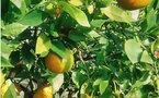 Salon international de commercialisation des fruits et légumes