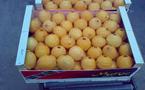 Notre pays est aujourd'hui importateur net de produits alimentaires vivriers