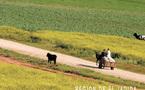 Les Assises de l'Agriculture évaluent le Plan Maroc Vert : Des résultats prometteurs mais des contraintes sérieuses