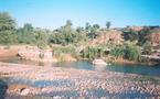 Essaouira : La forêt de Takoucht à la merci des pilleurs