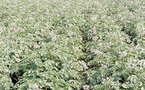 Domaine expérimental Melk-Zhar à Chtouka Aït Baha : La recherche agronomique appuie le Plan vert