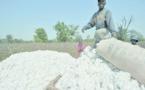 Côte d'Ivoire : Faut-il interdire l'exportation du coton?