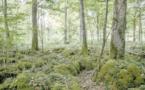 La gestion des sols peut fortement réduire le CO2