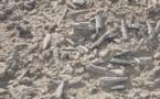 Des œufs fossilisés révèlent les secrets du ptérosaure