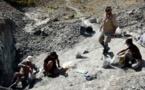 Découverte d'un fossile de chauve-souris géante en Nouvelle-Zélande