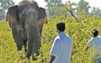 Insolite : Traque contre un éléphant