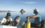 Dans les eaux du Mexique, deux espèces souffrent de l'appétit chinois
