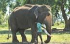 Sur la ligne de front entre hommes et éléphants en Inde