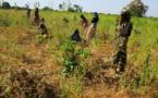 Les raisons du fiasco de  la politique agricole tchadienne