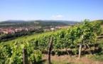 La viticulture de l'Oriental affiche un chiffre d'affaires annuel de 250 millions de DH