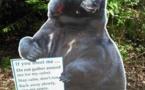 Insolite : Rencontre d'un peu trop près avec un ours