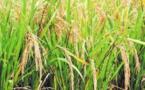 Les cours mondiaux des céréales en hausse