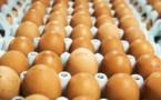 Le Maroc a produit plus de 6,6 milliards d'œufs en 2018
