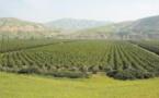 La campagne agricole se déroule dans des conditions normales dans la région Fès-Meknès