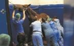 Une clinique 5 étoiles pour chevaux aux portes de Lyon