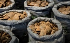 Hong Kong ne protège pas les animaux sauvages de la contrebande