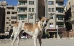 Dans les rues du Caire, le défi des chiens errants