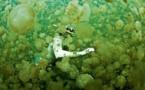Insolite : Nager avec les méduses