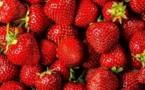 Coup d'envoi dans la province de Kénitra de la 9ème édition du Festival international de la fraise