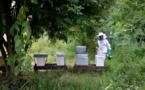 L'agriculture bio, c'est bon pour les abeilles