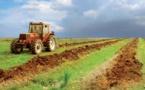 Performance satisfaisante  des activités non agricoles