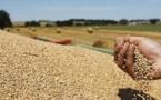 La production céréalière en forte baisse