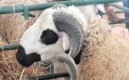 Les disponibilités en bétail dépassent la demande