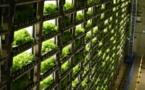 """Les """"usines à légumes"""" en ville pour remplacer la campagne au Japon"""