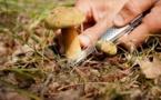 Insolite : Condamnés pour avoir cueilli trop de champignons