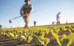 Agriculture et développement rural au Maroc
